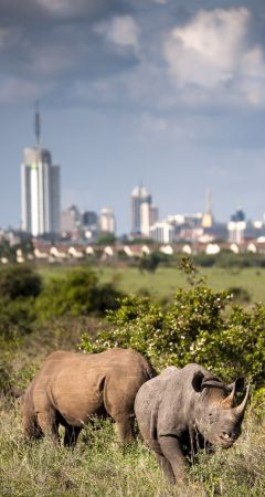 Nairobi National Park - image by Paolo Torchiv