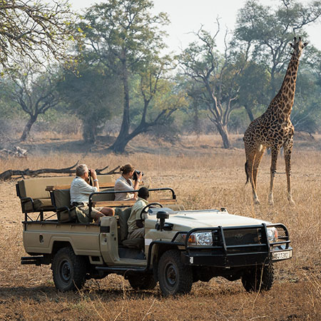Game drives can get you incredibly close to the wildlife...