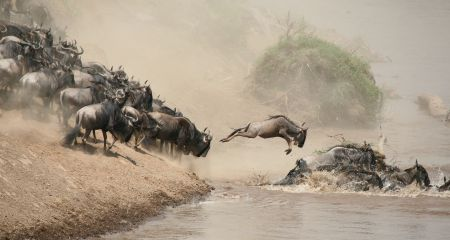 Migration crossing the Mara River