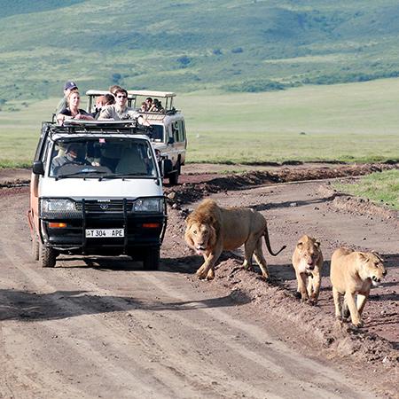 Safari on a Budget | Affordable Safari Options | Cheap Safaris | Budget