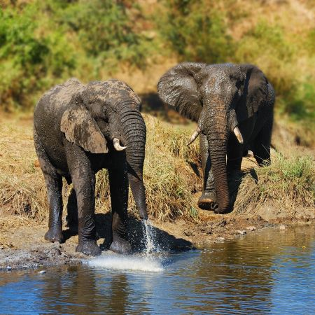 Elephants at a waterhole.
