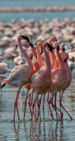 Flamingos at Makgadikgadi Pan