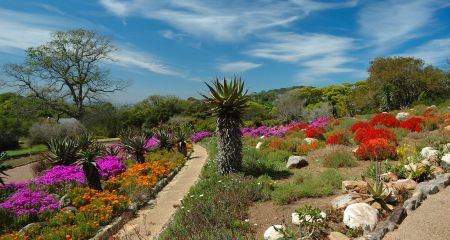 Kirstenbosch gardens are a beautiful place to spend a couple of hours.