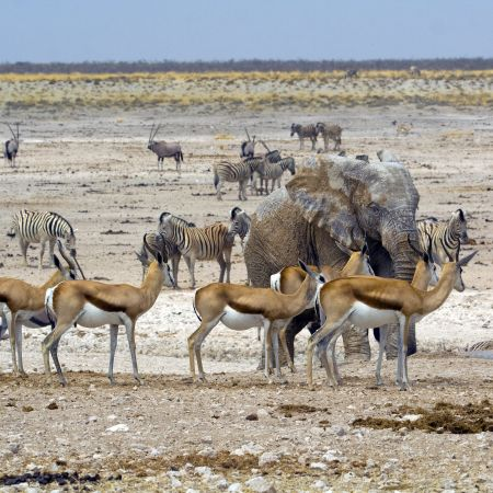 Animals gather to drink t a Waterhole