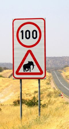 Beware of the elephants road sign.