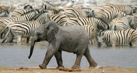 Etosha's waterholes are famous for their great game viewing.