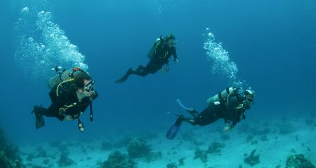 Divers at Aliwal shoal near Durban.