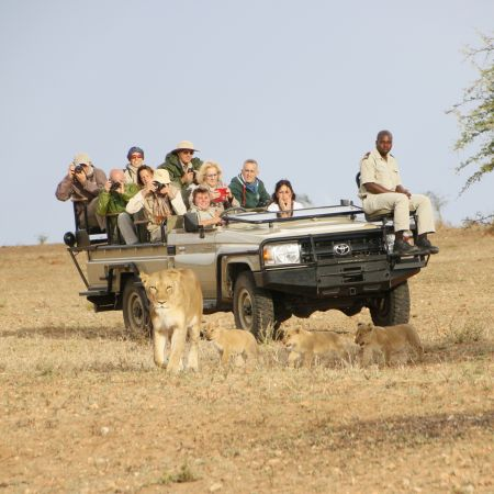 Tracking a lioness and her cubs at Kapama.