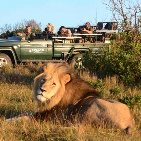 Game Drive Encounter