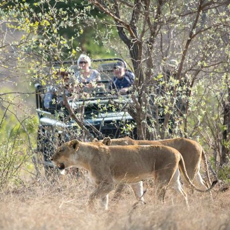 Game Drive At nThambo Tree Camp
