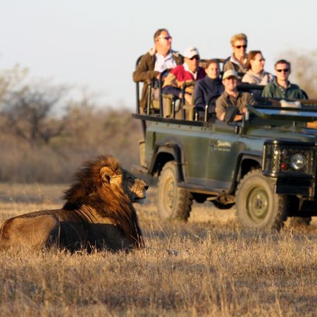 Lion & Game Drive Vehicle, Sabi Sands, South Africa