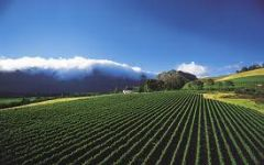 South Africa Holidays - The Cape Winelands