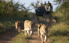 Mozambique Beach and Safari Holidays