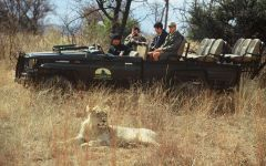 Guest Photos Taken On Safari  In The Waterberg