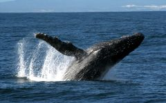 Whale Watching in South Africa