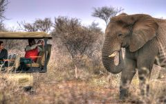 Guest Photos of North West Province Safaris