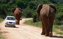 Self Drive Safaris in South Africa