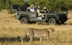 South Africa Safari Special Offers