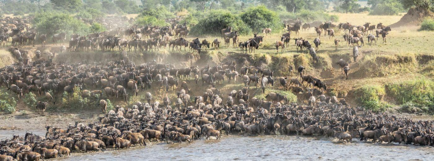 The Great Migration in Tanzania