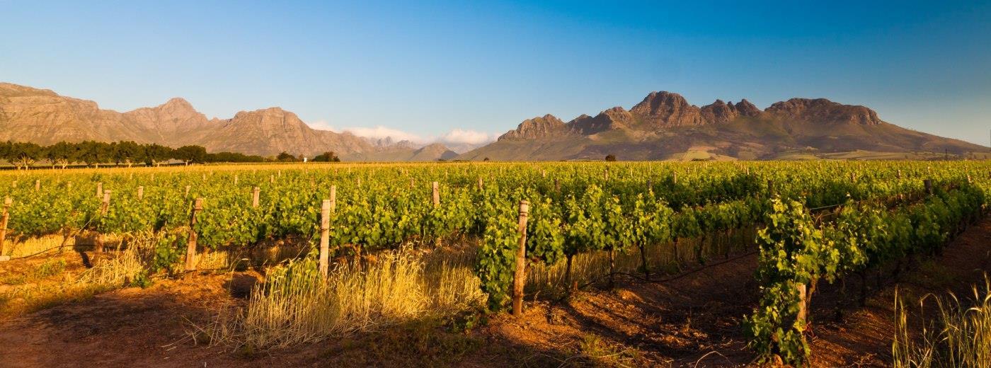 Risultati immagini per vineyards south africa