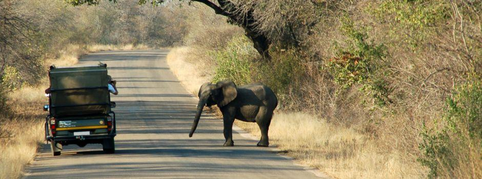 Guided Trips and Half-Day Safaris