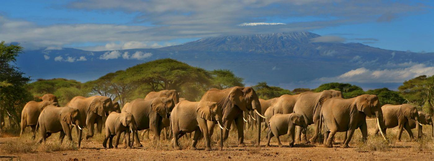 Картинки по запросу Amboseli National Park