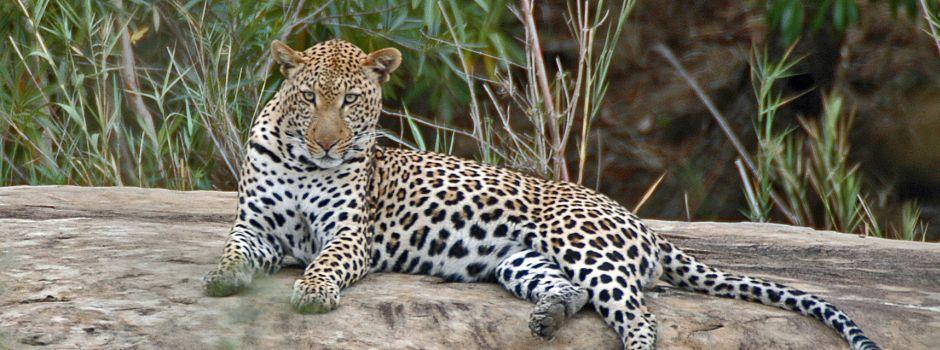 Luxury Game Reserve In KZN | Safari Game Lodge South ...