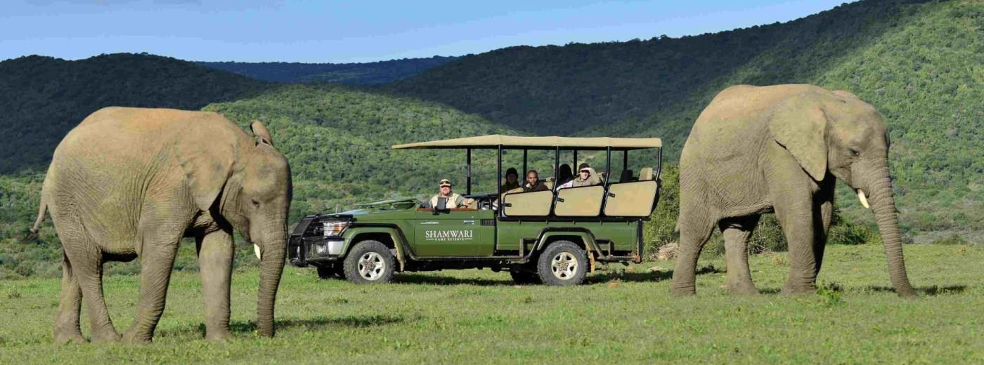 Shamwari Safari and Garden Route Explorer