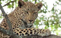 ITINERARY-4: The Best Of South Africa: From Cape Town to Kruger