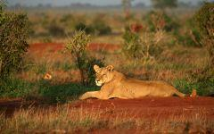 ITINERARY-02685: 7 Night Safari and Beach Holidays in Kenya