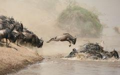 ITINERARY-02861: Seeing the Great Wildebeest Migration in Tanzania