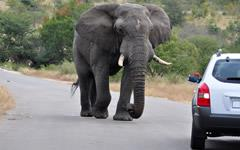 ITINERARY-04776: Kruger Self Drive Safaris