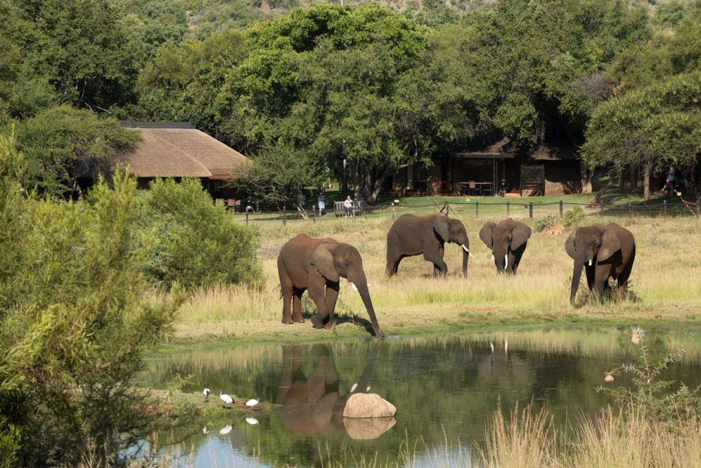 Elephant Safari Park Lodge Hotel