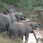 Elephants at a waterhole in the Eastern Cape.